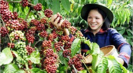تعزيز صادرات القهوة الإندونيسية إلى هولندا