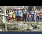 الوزيرة تطلب من الناس عدم إطلاق النار على التماسيح في جزيرة بولاو دايونغ