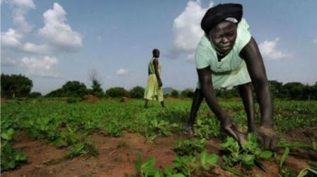 الرئيس البشير يوجه بفتح الحدود مع دولة جنوب السودان للمواطنين و التجارة