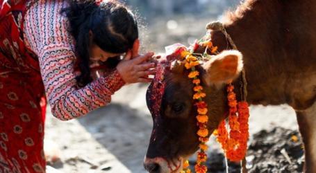 صحيفة: مسلمو الهند يقتلون بسبب البقر