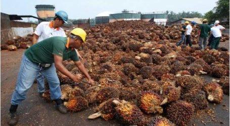 تعاون ماليزي وإندونيسي في حماية صناعة زيت النخيل