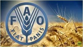 فاو: استقرار مؤشر أسعار الغذاء عالميًا في أغسطس