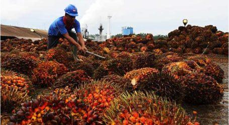 ماليزيا وإندونيسيا ينبغي أن تتعاونا لتعزيز استخدام زيت النخيل
