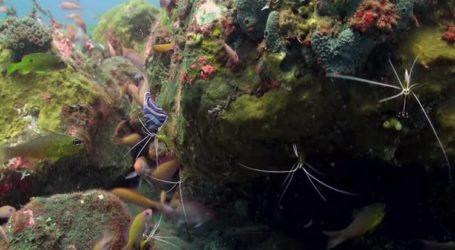 تهدف إندونيسيا أن تصبح أكبر مصدر للأسماك الزينة في العالم