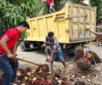 وزارة القوى العاملة: 11شركة لزيوت النخيل في غرب سومطرة تحصل على جوائز صفر للحوادث