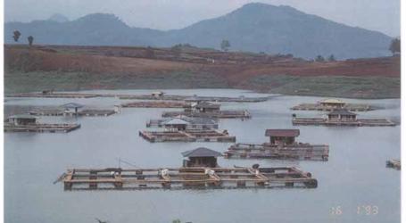توفر الحكومة 50 طنًا من العلف لمزارعي الأسماك في نوسا تينجارا